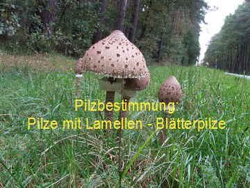 pilze erkennen und pilze bestimmen lehrfilm pilze mit lamellen. Black Bedroom Furniture Sets. Home Design Ideas